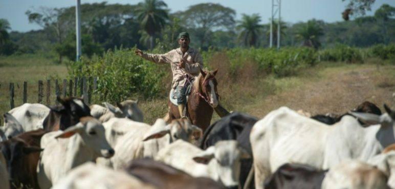 """Fedenaga advierte que el sector productivo del país está """"en ruinas"""""""