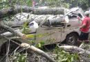 Caída de árbol en carretera de Colombia deja cinco fallecidos